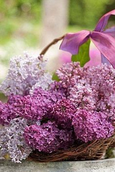 Lilacs in basket with a pink bow