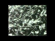 """Ausschnitte aus dem Kulturfilm """"Das Erbe"""" (1935). Ein interessanter Artikel zum Thema Kulturfilm gibt es unter http://www.mediaculture-online.de/fileadmin/bibliothek/zimmermann_propaganda/zimmermann_propaganda.pdf"""