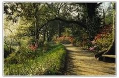 Magnolia Plantation and Gardens #attractions #charleston #southcarolina