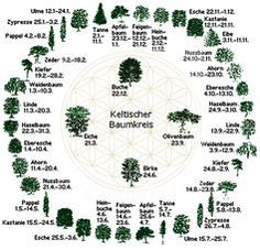 Dein Sternzeichen im keltischen Horoskop und was es über dich verrät You like to deal with the signs of the zodiac and what they say about a person? Then you will love the Celtic tree calendar! Wicca, Medicine Wheel, Zodiac Society, Natural Energy, Book Of Shadows, Spirit Animal, Life Is Beautiful, The Little Mermaid, Witchcraft