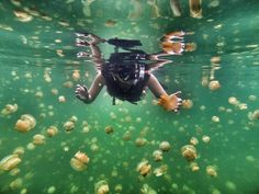 Snorkeling in a sea of jellyfish. Photo by Jakob Wittmann. Have a GoPro photo that's Photo of the Day worthy? Submit it for your chance to be shared! http://gopro.com/photos/photo-of-the-day/submit