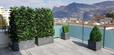Privacy Plants, Contemporary Garden Design, Terrace, Deck, Exterior, World, Gardens, Window Boxes, Living Fence