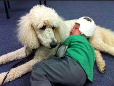 Standard Poodle giving comfort to disabled child Toy Poodle Apricot, Autism Service Dogs, Poodle Grooming, What Dogs, Therapy Dogs, Working Dogs, Dog Training Tips, Dogs And Puppies, Poodle Puppies