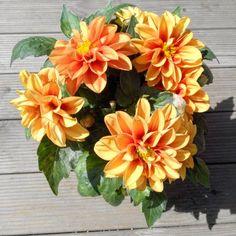 """22 Beğenme, 1 Yorum - Instagram'da Pan Çiçekçilik (@pancicek): """"Asteraceaedahlia (yıldız çiçeği), anavatanı Meksika'dır, yumruludur günde en az 4 saat doğrudan…"""""""