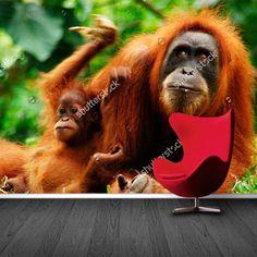 Fotobehang Oerang Oetang met baby | Maak het jezelf eenvoudig en bestel fotobehang voorzien van een lijmlaag bij YouPri om zo gemakkelijk jouw woonruimte een nieuwe stijl te geven. Voor het behangen heb je alleen water nodig!   #behang #fotobehang #print #opdruk #afbeelding #diy #behangen #aap #dieren #dier #oerangoetang #baby