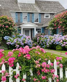 Nantucket Cottage, Nantucket Island, Hydrangea Landscaping, Landscaping Ideas, Blue Shutters, House By The Sea, Cottage Homes, Cottage Gardens, Beach Cottages