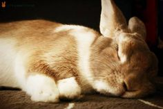 Image result for rabbits sleeping