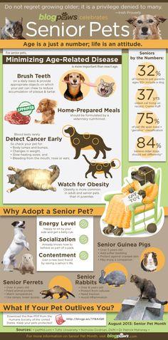 Form BlowPaws.com Senior Pets Infographic