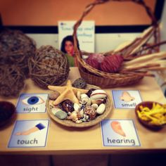 Natural items on display to encourage use of senses.