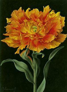 Jan Voerman Jr. Orange Double Tulip 20th century