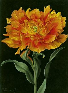 ღღ Jan Voerman Jr. Orange Double Tulip 20th century