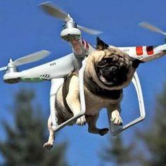 Dog Walker New Stile