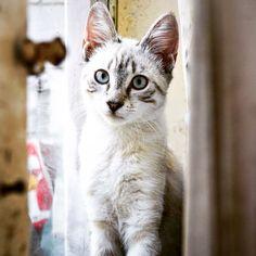 My cat, Oliver!