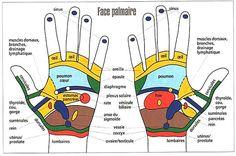 Nos mains et pieds sont connectés avec le reste de notre corps par une série de nerfs. Chaque organe ou partie du corps correspond à une zone ou à un point sur les mains, les pieds ou les oreilles. La connaissance de ces différents points permet de localiser et dissiper les tensions afin de rétablir …