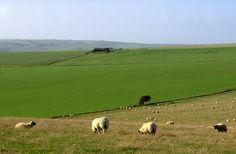 South Downs, East Sussex