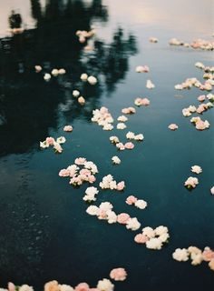 Flowers, reflection, water, pond
