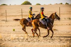 Horseback riding in Dubai: where to practice and participate in competitions?