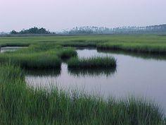 the wetlands, Coastal Carolina, smell that marsh