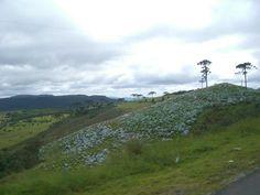 Colinas de magnolias.. Brasil