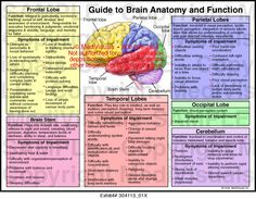 Frontal temporal parietal and occipital lobes cerebellum and brain stem with list of function and symptoms of impairment Description from I searched for this on images Brain Anatomy And Function, Human Brain Anatomy, Brain Lobes And Functions, Function Of Brain Parts, Human Anatomy And Physiology, Brain Stem, Brain Science, The Brain, Lobes Of Brain