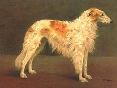 Fairman, Francis (b,1836)- Borzoi