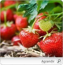 La fraise a un pouvoir antioxydant très élevé