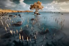 Lone tree by the shoreline of Pagbilao Province, Quezon, Philippines  - http://earth66.com/infrared/lone-tree-shoreline-pagbilao-province-quezon-philippines/