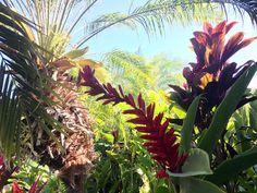 #ECOHOTELS #SWD #GREEN2STAY MAUI COAST HOTEL Happy aloha Friday from beautiful sunny Kihei, Maui! http://www.green2stay.com/usa-eco-hotels