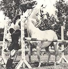 Snowman, a plow horse who was rescued from an auction for 80 dollars, went on to become a famous showjumper, and was eventually inducted into the show jumping hall of fame! All The Pretty Horses, Beautiful Horses, Animals Beautiful, Adorable Animals, Beautiful Things, Horse Photos, Horse Pictures, Arte Equina, Horse Story