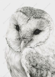 Pencil Drawings Of Owls In Black And White 1000+ ideas about pencil drawings on pinterest drawings ...