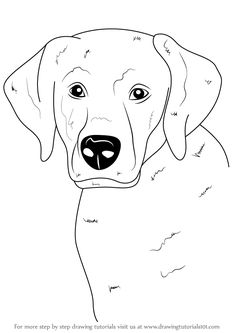How to Draw Dogs - Draw A Labrador Face - Easy Step by Step Drawing Tutorial - Learn How To Draw A Dog and Cute Puppies - Cartoon and Realistic Animals Love Drawings, Cartoon Drawings, Animal Drawings, Easy Drawings, Drawing Animals, You Draw, Learn To Draw, How To Draw Dogs, Dog Drawing Tutorial