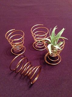 Air plant stand tillandsia holder