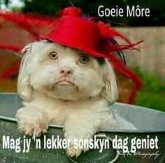 Goeie More Good Morning Wishes, Day Wishes, Good Morning Quotes, Goeie More, Inspirational Quotes, Afrikaanse Quotes, Pup, Massage, Humor