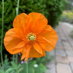 My Father's World: Orange My Father's World, Photo A Day, Orange, Nature, Flowers, Plants, Beautiful, Naturaleza, Plant