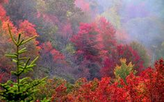 Fall in Asheville is the most beautiful site!  images of asheville nc - Google Search