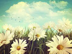 daisies sky - Cerca con Google