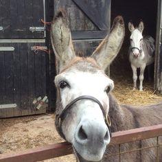 Visiting donkeys at