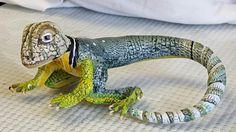 Polymer clay collared lizard