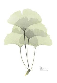 Ginkgo in Pale Green Prints by Albert Koetsier at AllPosters.com