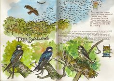Learn about keeping a sketchbook journal,  a creative and enriching activity that will make you happy.