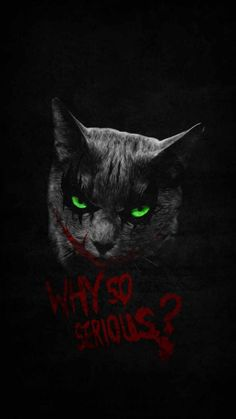 Why So Serius Cat - IPhone Wallpapers