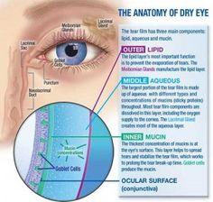 Dry Eye Anatomy
