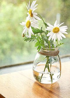 pretty and simple daisy in glass My Flower, Flower Vases, Fresh Flowers, Flower Power, Wild Flowers, Beautiful Flowers, Flowers In A Vase, Ikebana, Plantas Bonsai