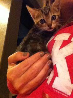 Emmy as a 6 week old kitten.