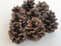 Pine Cones Small Pinecones Natural Seasoned by VikisVarietyCraft