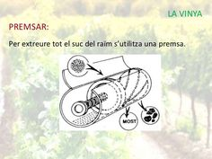 Máquina para prensar la uva