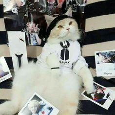 Gato Army xdxd