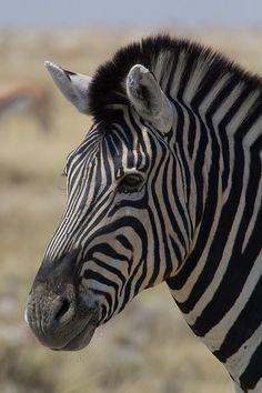 Etosha National Park, Namibia | Flickr - Photo Sharing!