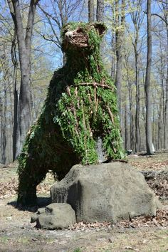 Coopers Rock Bear, West Virginia