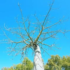 #Sky #roots. #blue #tree #nature